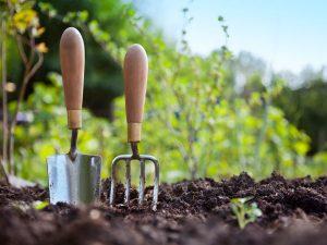 Plantering trädgård