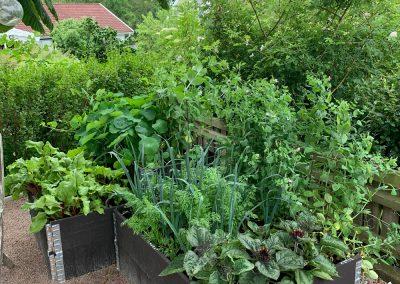Grönsaker odlingslådor